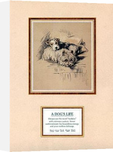 Dog's Life IV by Mac Lucy Dawson