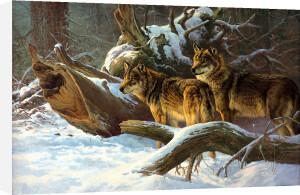 Wolves in Winter by Dick Van Heerde