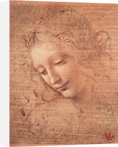 Testa di Faniciulla Detta by Leonardo da Vinci