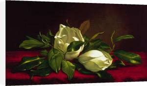 Magnolia Still Life I by Martin Johnson Heade
