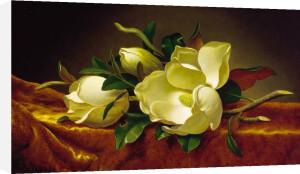 Magnolia on Gold Velvet Cloth by Martin Johnson Heade