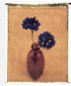 Cornflowers by Scott Morrish