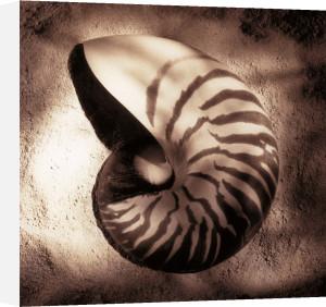 Nautilus by Laurel Wade