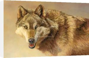 Wolf Portrait by Kalon Baughan
