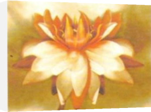 Waterlily by Cameron