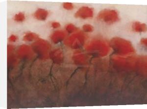 Poppy Fortune by Gordon