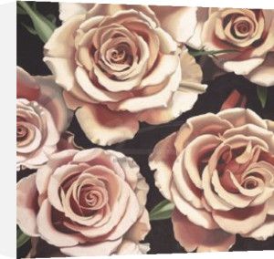 Roses by Hellman