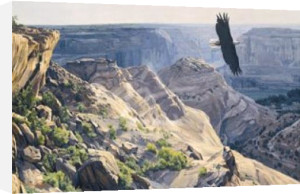 Bald Eagle over Canyon de Chelley by Dino Paravano