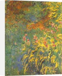 Irises, 1914-17 by Claude Monet