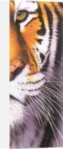 Tiger Eye by Mitch Ridder