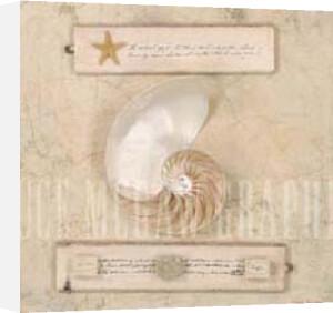Nautilus Journal by Leslie Mueller