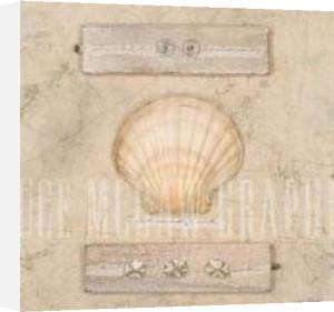 Fan Shell Journal by Leslie Mueller