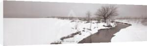 Winter Stream by Mark MacKinnon