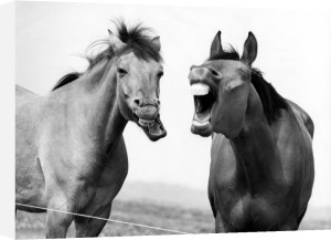 Two horses laughing by Walter Sittig