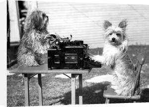 Two dogs typing by Anonymous
