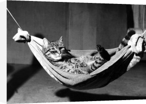 Cat in a hammock by Rüdiger Poborsky