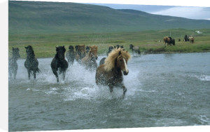 Horses crossing a river by Roland Marske
