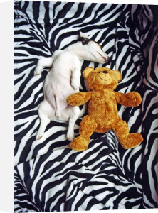 Sleeping with teddy by Heinz Krimmer