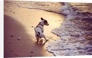 Dog on a beach I by Heinz Krimmer