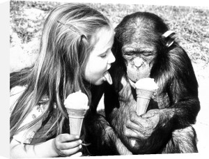 Girl eating ice cream with a chimp by John Drysdale