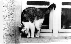 Cat on window sill by Jimmy Schütz