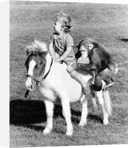 Chimp and child on horseback by John Drysdale