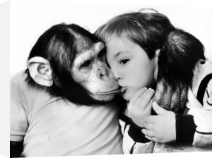 Chimpanzee kissing a little boy by John Drysdale