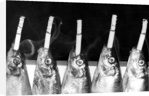 Smoked fish held by clothespegs by Heinz Krimmer
