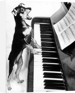 Singing dog plays the piano by Radis Panin-Sibagatullin