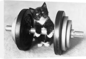 Little kitten tries weight-lifting by Keystone