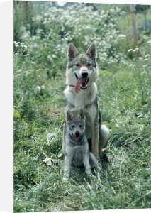 Dog with puppy by Gerd Pfeiffer