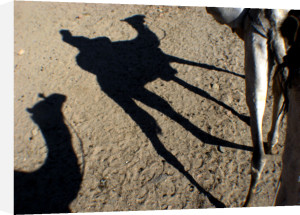 Silhouettes of camels, Egypt by Heinz Krimmer