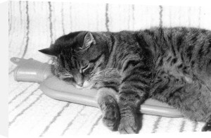 Cat lying on hot-water bottle 1 by Rüdiger Poborsky