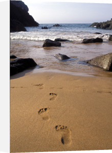 Footprints in the sand by David Hornback