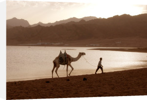 Bedouin with camel by Heinz Krimmer