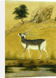 A Buck. Mughal, C. 1800 by Christie's Images