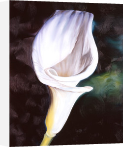 Virgin Lily by James Knowles