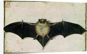 Bat 1522 by Albrecht Dürer