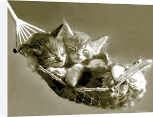 Kittens in a Hammock by Keith Kimberlin