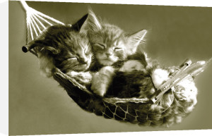 Kittens in a Hammock by Keith Kimberlin