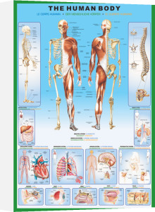 The Human Body by Maxi