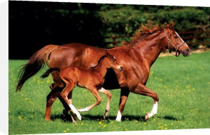 Mare & Foal by Maxi
