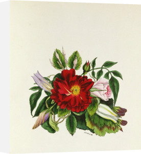 Rose from The Flowers of Shakespeare, 1845 by Jane Elizabeth Giraud