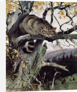 Wild cat by Anonymous