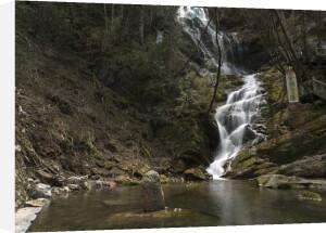 Stream in Shennongjia National Park, china by Assaf Frank