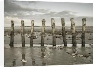 Groynes at ast head beach, West Sussex coast by Assaf Frank