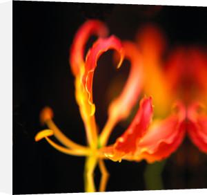 Orchid I by Erin Rafferty