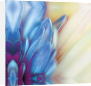 Purple Velvet by Erin Rafferty