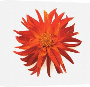 Flower Focus II by Erin Rafferty