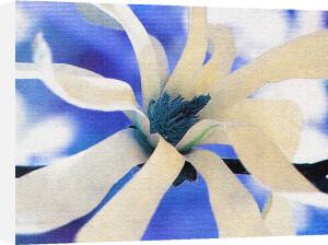Symphony in Blue & White by Erin Rafferty